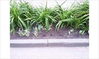 Экологический бумеранг вернется: некоторые череповчане выкапывают «общественные» цветы