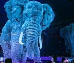 Цирк изГермании отказался использовать всвоих представлениях животных