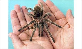 Сбылась мечта Василины: вЧереповец привезли скорпионов ипауков
