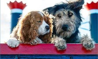 Disney нашел идеального пса нароль Бродяги вэкранизации мультфильма «Леди иБродяга»