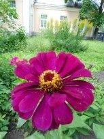 Посмотрите, как хорош дворик Детского музея Череповца летом!